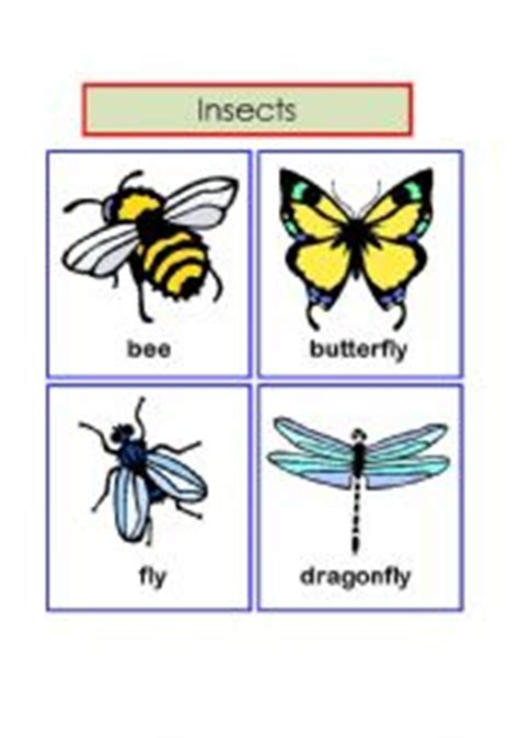 printable insect flash cards insects bugs printables flash cards pictures to pin on