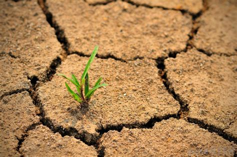 drought resistance definition what are the different types of drought resistant crops
