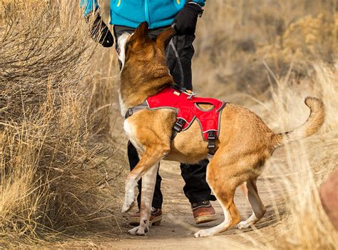 ruffwear harness ruffwear web master padded harness with built in handle 5 point adjustment