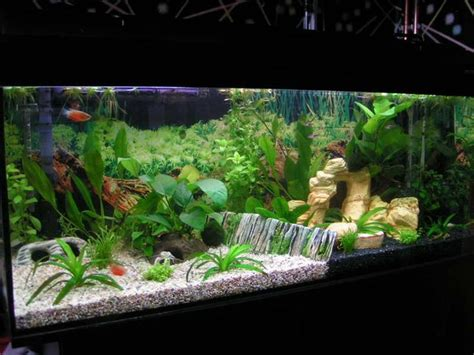 Freshwater Aquascaping Designs by 1000 Images About Fish Tank Ideas On