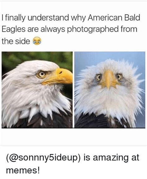 Funny Eagles Meme - i finally understand why american bald eagles are always