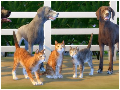 animals 187 sims 4 updates 187 best ts4 cc downloads
