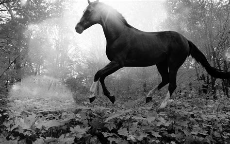 mt horse art animal fall leaf mountain flare dark bw