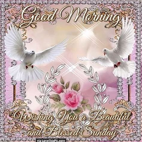 good morning wishing   beautiful  blessed sunday pictures   images