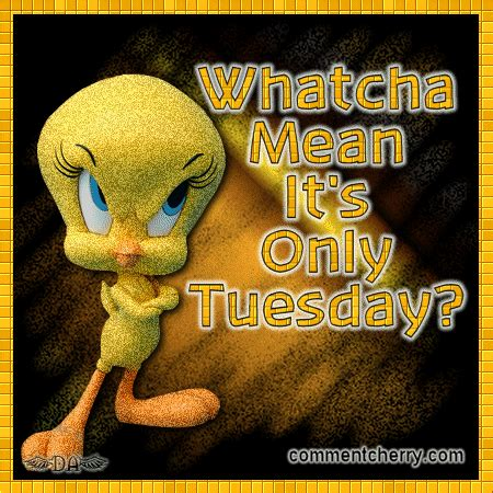 tuesday images watcha its only tuesday pictures photos and images