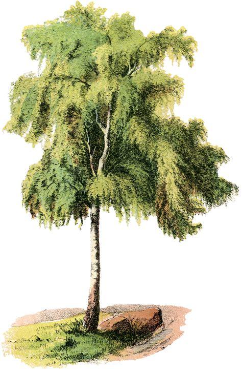 vintage tree vintage tree illustration weeping the graphics