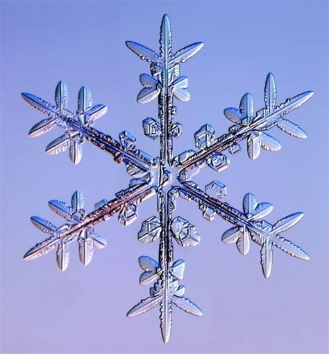 google images of snowflakes snowflakes google search icey miracles pinterest