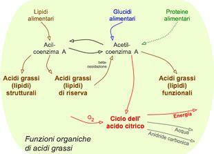acido arachidonico alimenti acidi grassi