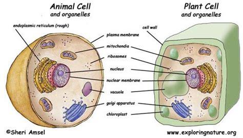 cells exploring nature educational resource