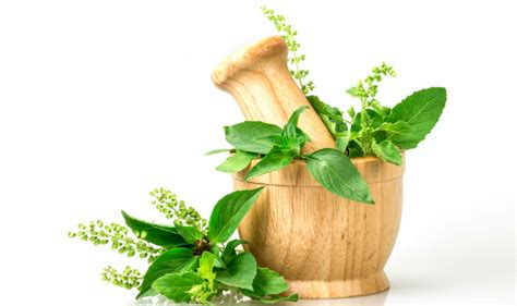 Tulsi Basil To Cure Skin Problems by Benefits Of Tulsi 5 Ways Using Holy Basil Will
