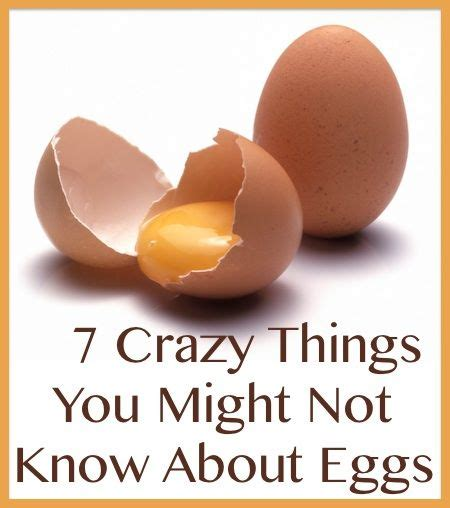 7 Things You May Not About by 17 Best Images About Things On