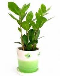 houseplants that don t need sunlight pinterest the world s catalog of ideas