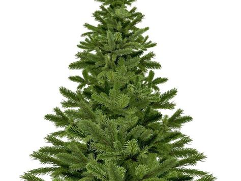 29 news bed bugs in christmas trees pflugerville tree recycling tx patch