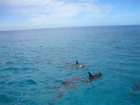 ocean joy catamaran ocean joy dolphin watch snorkel cruise from ko olina