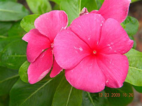 pretty plants how to draw pretty flowers