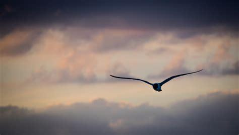 fly away i ll fly away rluphoto