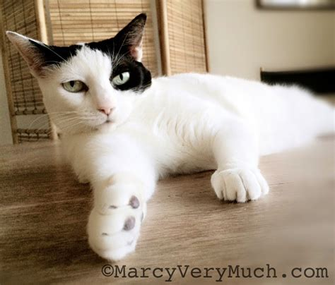 world cat it s world cat day marcy much