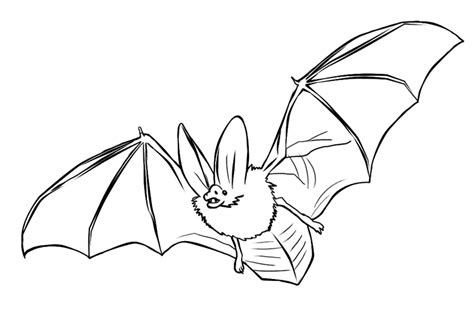 printable bats coloring pages coloring me