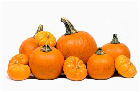photos pumpkins ways to use pumpkins southern states cooperative