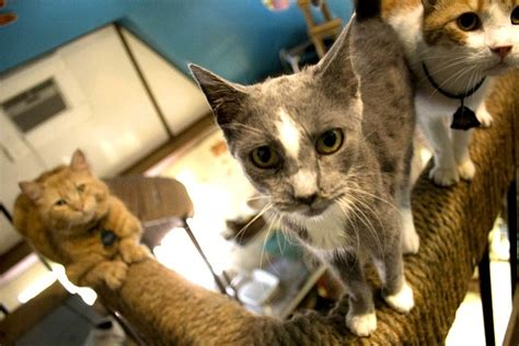 best little cat house love and care at life s end the best little cat house in pa catster