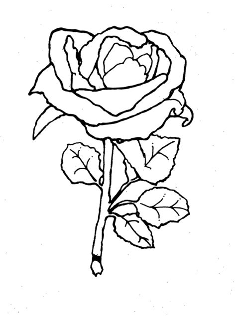 the gallery for gt beauty and the beast rose coloring page