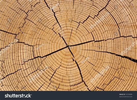 circular cross section wooden circular cross section of split tree trunks layered