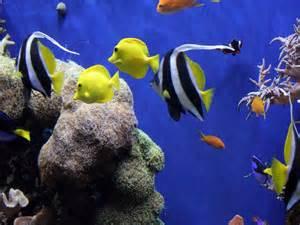 Wallpapers Backgrounds Aquarium Ocean Life 1024x768 Deluxe Wallpaper