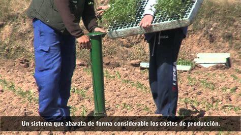 plantadores de hortalizas plantadoras carnicer tolosana youtube