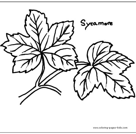 sycamore leaf coloring page sycamore leaf template coloring home