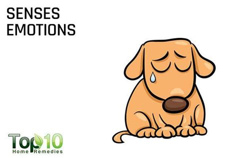 can dogs sense sadness 10 reasons why dogs make us happier and healthier page 2 of 3 top 10 home remedies