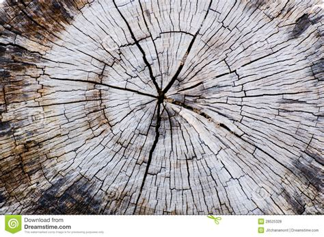 section of a tree cross section of tree trunk royalty free stock photos
