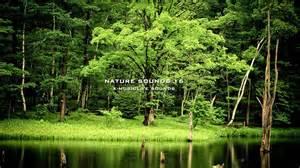 Sound of nature birds song no music 180 mins myideasbedroom com