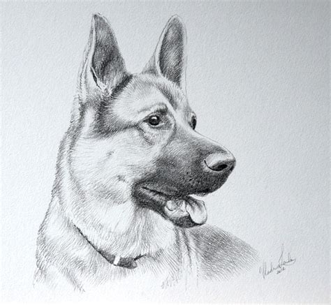Drawing Dogs by Sketches