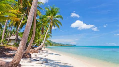 imagenes de paisajes en la playa palmeras de coco en la playa fondos de pantalla hd