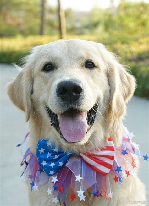 patriotic puppy patriotic puppy happy fourth of july golden woofs