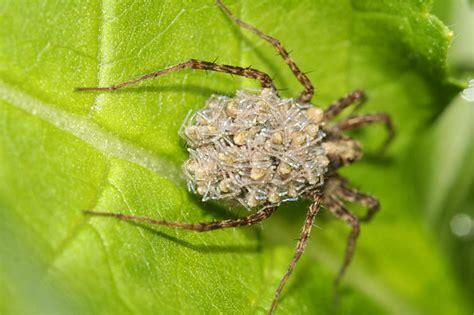 wie kommen spinnen ins haus spinnen im haus nabu niedersachsen