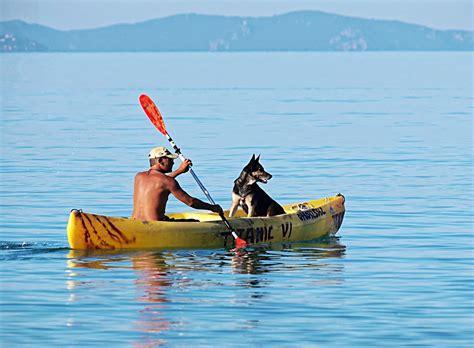 dog boat life jackets best german shepherd life jacket water vest for large dogs