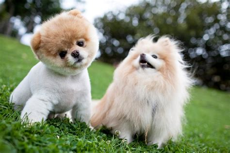 top ten cutest puppies top 10 cutest puppies puppies pet photos gallery 1o3glonbyp