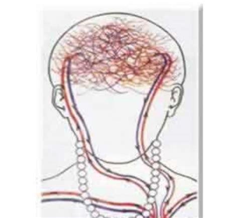 Kalung Choker Horor Tetesan Darah 1 cara kerja kalung biofir