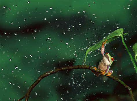 payung disney sedang 19 19 gambar hewan yang sedang berlindung di bawah payung alami