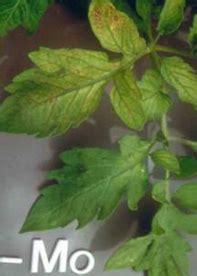 Pupuk Kalsium Boron Cair 16 jenis defisiensi dan ciri ciri daun tanaman kekurangan