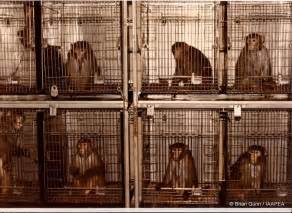 Does Vanity Planet Test On Animals The Rise Of The Planet Of The Apes Animal Testing Goes