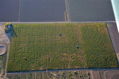 worlds largest corn maze   big