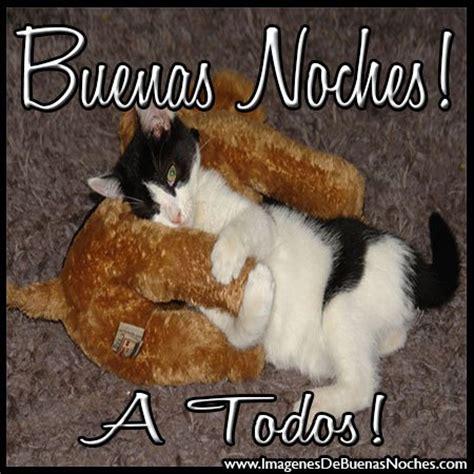 imagenes buenas noches con gatos im 225 genes tiernas de buenas noches con gatos frases