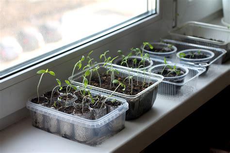coltivare il proprio giardino orto indoor come coltivare il proprio orto in casa