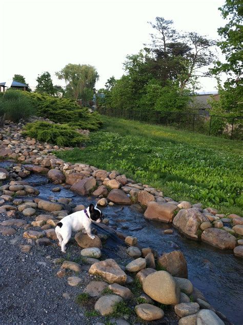 how to build a dog park in your backyard how to build a dog park in your backyard how to design a