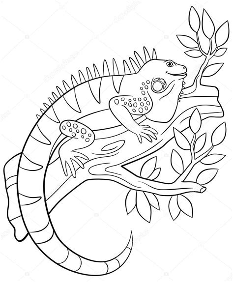 iguana coloring page iguana coloring pages to and print for free