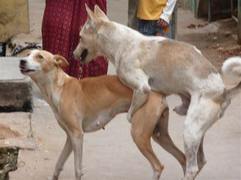 perros cojiendo mujeres stupidvideos los indios en contacto directo con su fauna el canto del