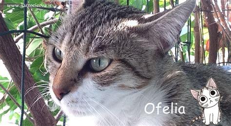 alimentazione gatta sterilizzata neoplasia linfoide nel gatto