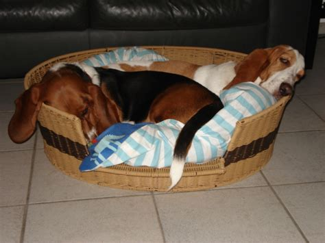 dog bed attached to bed human dog bed attached to bed quotes